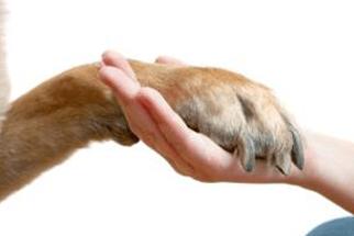pets-cast